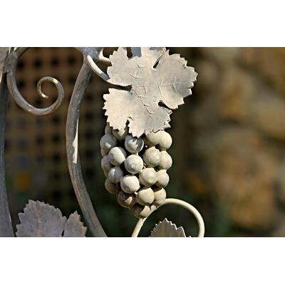 605e0478cd8a3_grape-2759568_1920.jpg